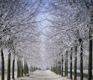 Lime-lined road in winter, Li...