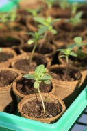 Close-up of seedlings in biod...