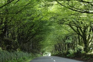 """Tree tunnel\"" parkw..."