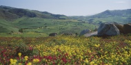 Italy, Sicily, View of flower...