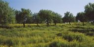 Spain, Mallorca, View of almo...