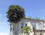 Dilapidated house in the hist...