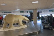 Stuffed Polar bear (Thalarcto...