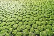 Moss-grown stones
