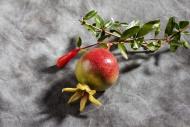 Twig with mini pomegranate