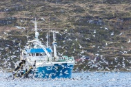 Norway, Troms, Fishing boat a...