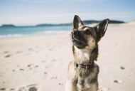 Portrait of mongrel on the beach
