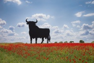 Bull shaped sign in poppy fie...