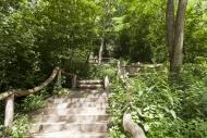 Stairs to Drachenberg, Grunew...