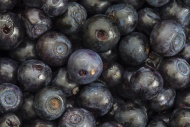 European blueberry / bilberry...