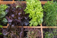 Square foot garden showing di...