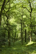 The woodland at Woody Bay in ...
