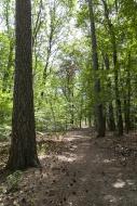 Forest, Grunewald, Berlin