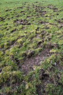 Ruined grassland / lawn roote...