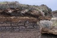Peat hag showing exposed laye...