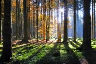 Hochwald im Herbst bei Gegenl...