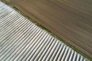 Aerial view field asparagus g...