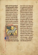 A Goat; Unknown; Th�rouanne? ...
