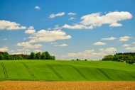 Fields and fields in spring, ...