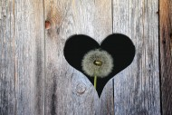 Heart in a wooden door with d...