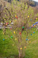 Shrub at Easter with colored ...