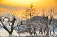 Frozen Bare Trees in Sunset a...