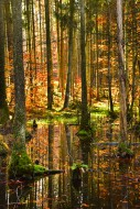Autumn-colored mixed forest i...