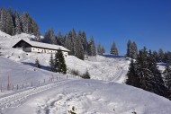 On the way to the Mittelalpe ...