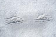 Imprints of wingtips / wing t...