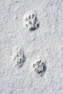 Close-up of footprints showin...