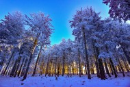 Snowy forest in winter with s...
