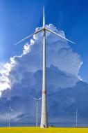 Wind turbines in a rapeseed f...